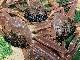 【コロナ支援 数量限定!送料無料】鳥取県産 茹で松葉がに[中]400g×3尾セット 松葉蟹 ボイル 冷凍配送 ※ほかの商品との同梱不可