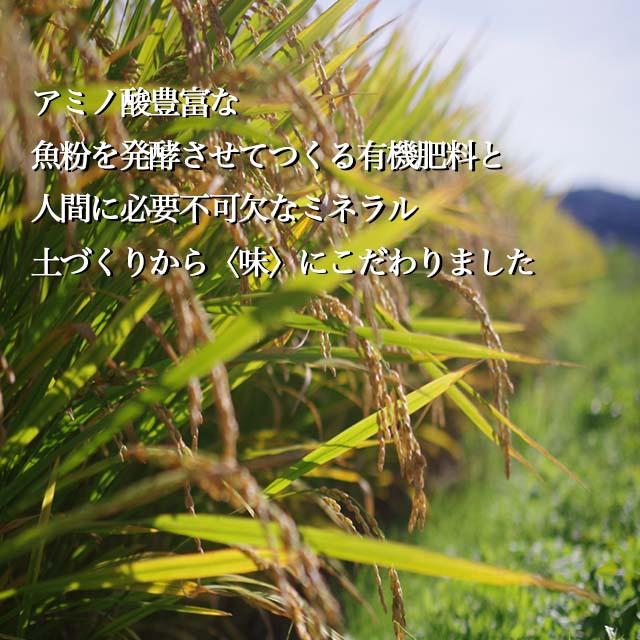 【新米】甘くてもっちり、冷めても美味しいお米「きらほ」 玄米 (2kg×3袋)
