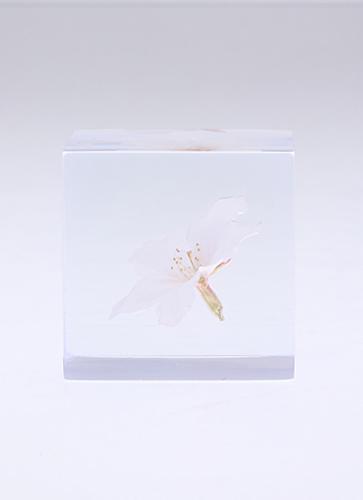 宙 -SOLA- Cube 桜 ソメイヨシノ