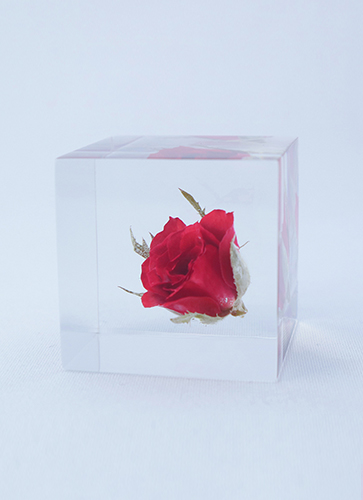 宙 -SOLA- Cube バラ