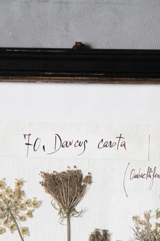 Officina Naturalisハーブ額絵M Daucus Carota