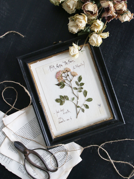 Officina Naturalisハーブ額絵S Rose The Fairy