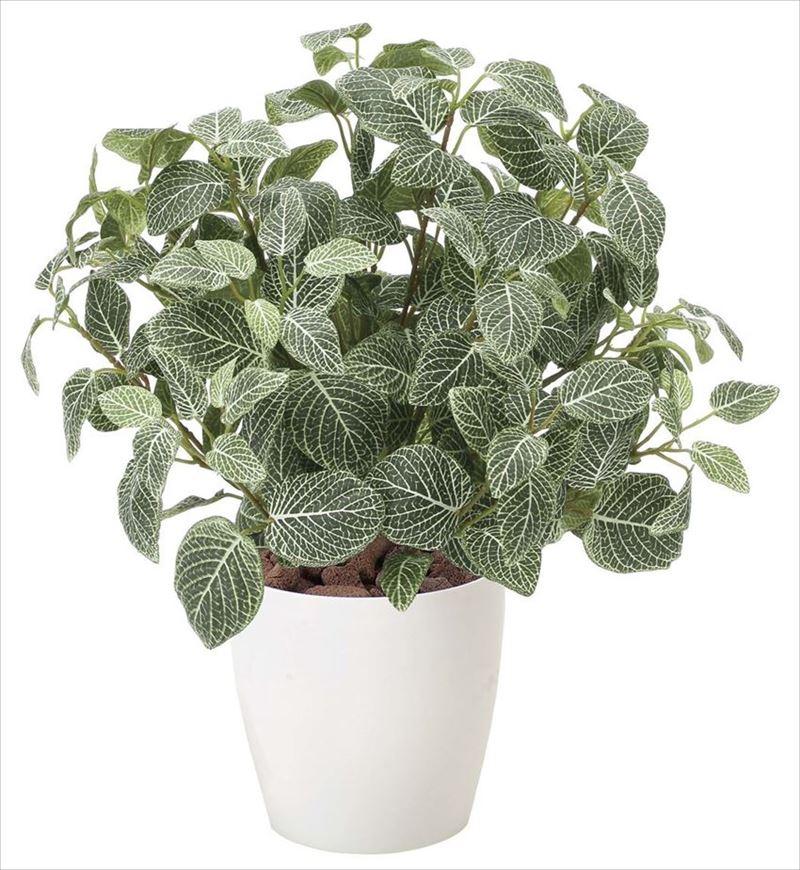 観葉植物 インテリアグリーン フェイク 人工観葉植物 光触媒 フィットニアM  《アートグリーン》