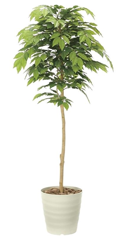 観葉植物 インテリアグリーン フェイク 人工観葉植物 光触媒 ケヤキ1.6 《アートグリーン》