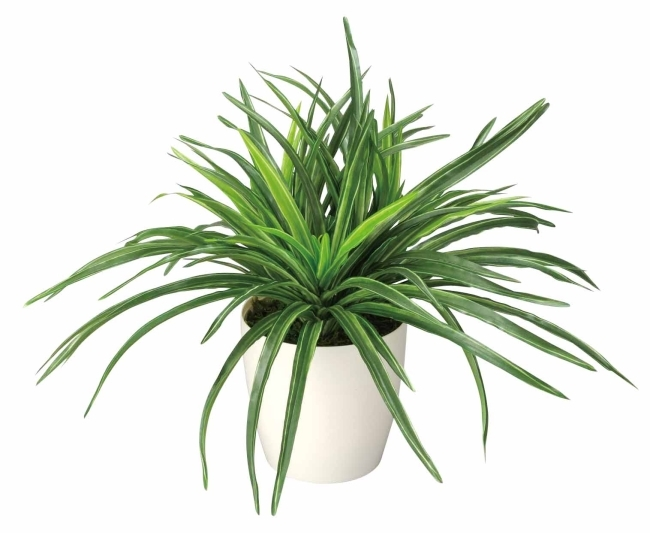 観葉植物 インテリアグリーン フェイク 人工観葉植物 光触媒 ドラセナ  《アートグリーン》