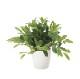 観葉植物 インテリアグリーン フェイク 人工観葉植物 光触媒 ロ—レル  《アートグリーン》
