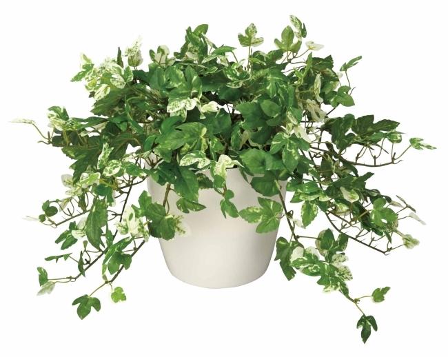 観葉植物 インテリアグリーン フェイク 人工観葉植物 光触媒 アンペロシスアイビ−M  《アートグリーン》