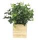 観葉植物 インテリアグリーン フェイク 人工観葉植物 光触媒 ボックスウッドK 《アートグリーン》