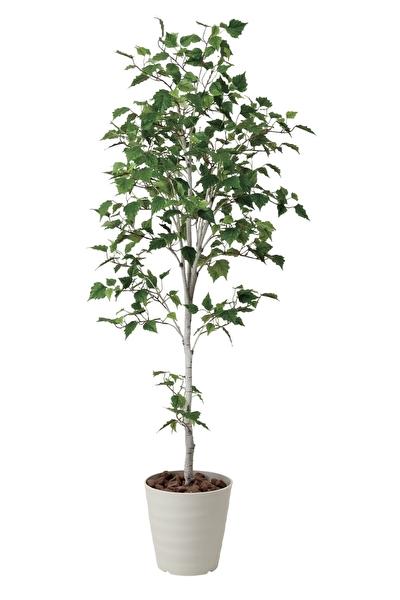 観葉植物 インテリアグリーン フェイク 人工観葉植物 光触媒 白樺シングル1.8  《アートグリーン》