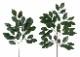 観葉植物 インテリアグリーン フェイク 人工観葉植物  榊 大中4本セットN <光触媒加工なし> 《アートグリーン》