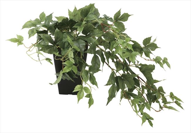 観葉植物 インテリアグリーン フェイク 人工観葉植物 光触媒 メイプルアイビ−  《アートグリーン》