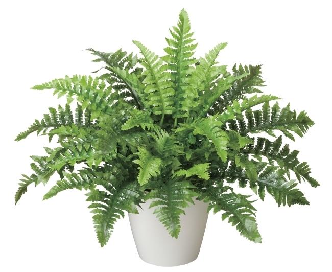 観葉植物 インテリアグリーン フェイク 人工観葉植物 光触媒 ボストンファン  《アートグリーン》
