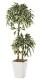 観葉植物 インテリアグリーン フェイク 人工観葉植物 光触媒 斑入りベンジャミンダブル 1.2  《アートグリーン》