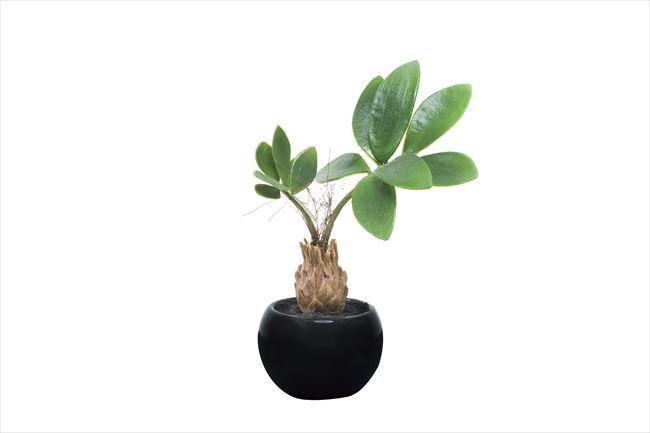 観葉植物 インテリアグリーン フェイク 人工観葉植物 光触媒 パキラインポット  《アートグリーン》