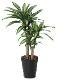 観葉植物 インテリアグリーン フェイク 人工観葉植物 光触媒 幸福の木1.1  《アートグリーン》