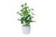 観葉植物 インテリアグリーン フェイク 人工観葉植物 光触媒 ミニポトスポット  《アートグリーン》