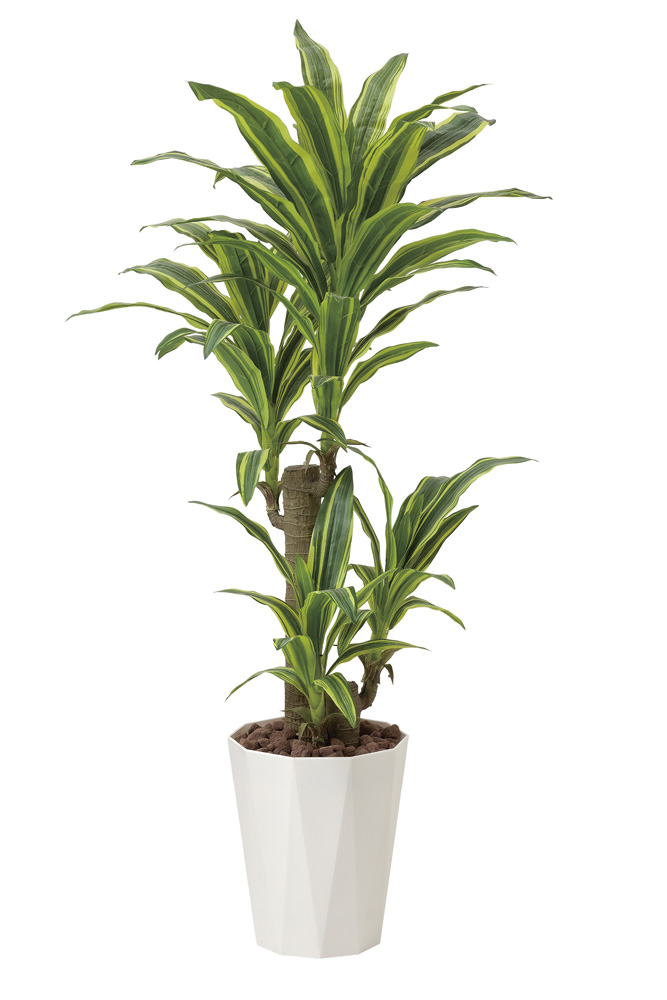 観葉植物 インテリアグリーン フェイク 人工観葉植物 光触媒 フレッシュドラセナ1.25  《アートグリーン》
