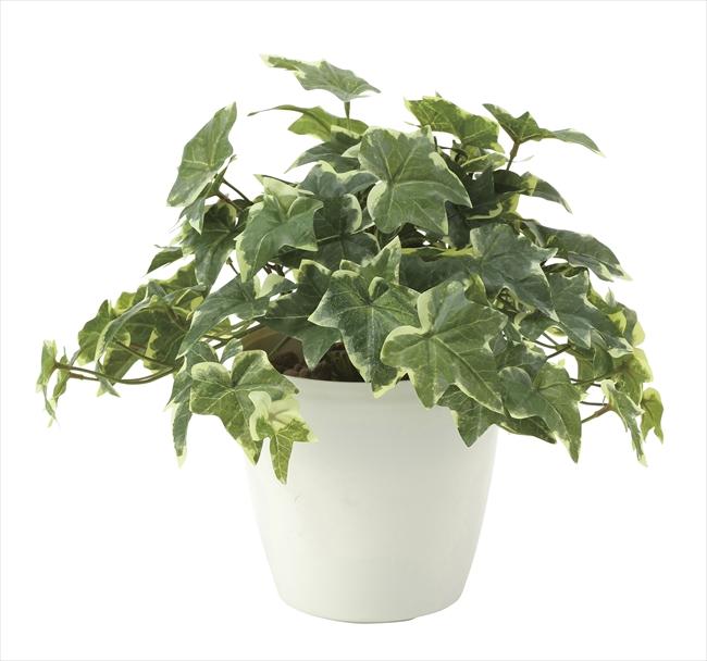 観葉植物 インテリアグリーン フェイク 人工観葉植物 光触媒 フレッシュ斑入りアイビ−  《アートグリーン》