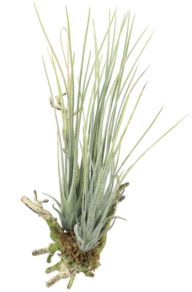 観葉植物 インテリアグリーン フェイク 人工観葉植物 光触媒 エア—プランツL(ポリ製)  《アートグリーン》