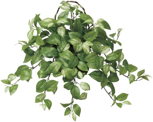 観葉植物 インテリアグリーン フェイク 人工観葉植物 光触媒 壁掛ホヤ  《アートグリーン》