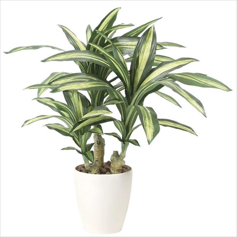 観葉植物 インテリアグリーン フェイク 人工観葉植物 光触媒 幸福の木  《アートグリーン》