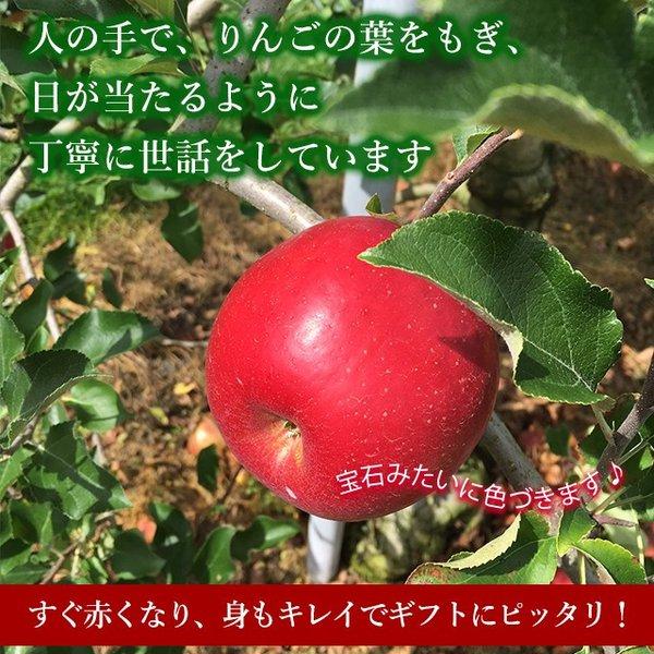【11月 陽光 】 美空野 飛騨 りんご 5kg 箱 14〜16玉 秀品 贈答用  高山 果物 フルーツ 生 リンゴ お歳暮 送料無料 同梱不可