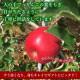 【11月 陽光 】 美空野 飛騨 りんご 3kg 箱 8〜12玉 秀品 贈答用  高山 果物 フルーツ 生 リンゴ お歳暮 送料無料 同梱不可