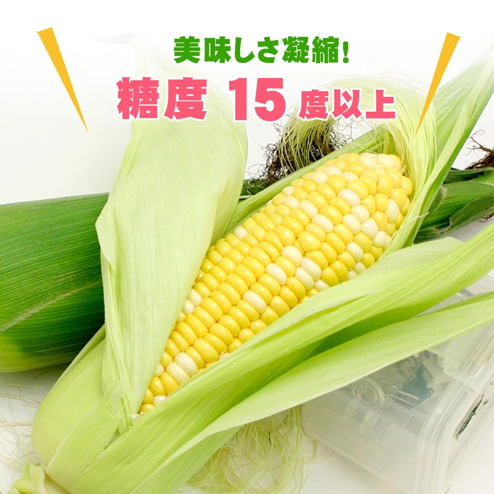 【予約8月中旬〜9月上旬】 とうもろこし タカネコーン たかねコーン 高根コーン トウモロコシ 高山 販売 糖度15度以上 【 1本 】