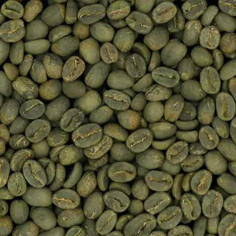 コロンビア サザ農園 カスティーヨ  生豆 230g