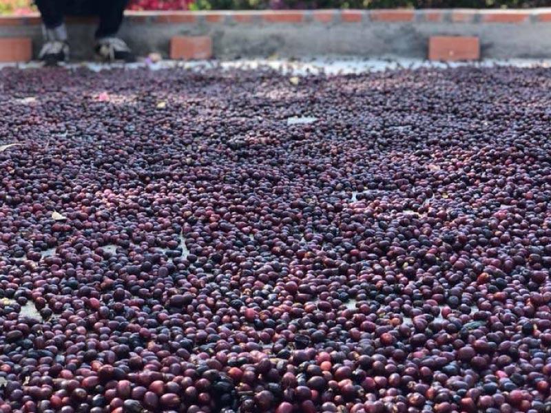 パナマエスメラルダ農園 マリオN 100g