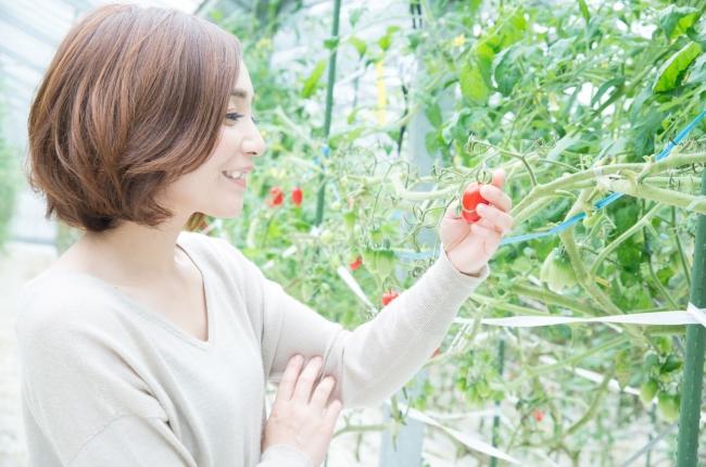 赤の輝石 五ヶ瀬町のトマトソースセット (ギフト箱入り)