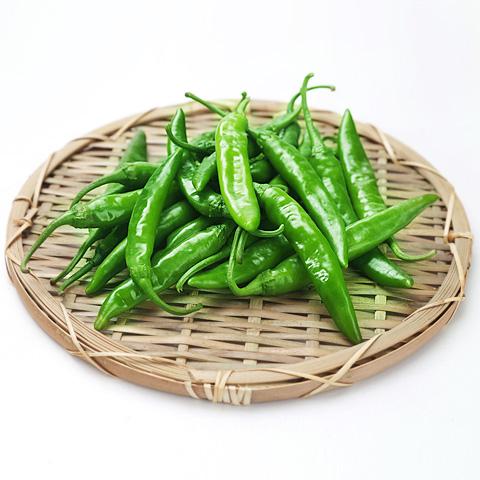 [冷]時価・青唐辛子300g(辛口)