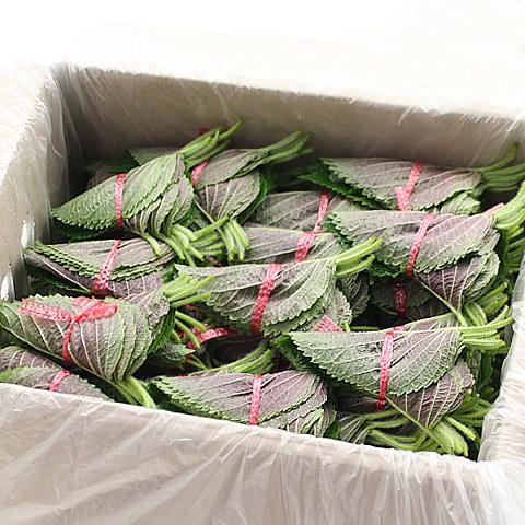 【値上げ】[冷]胡麻の葉(約35〜40枚):入荷日未定