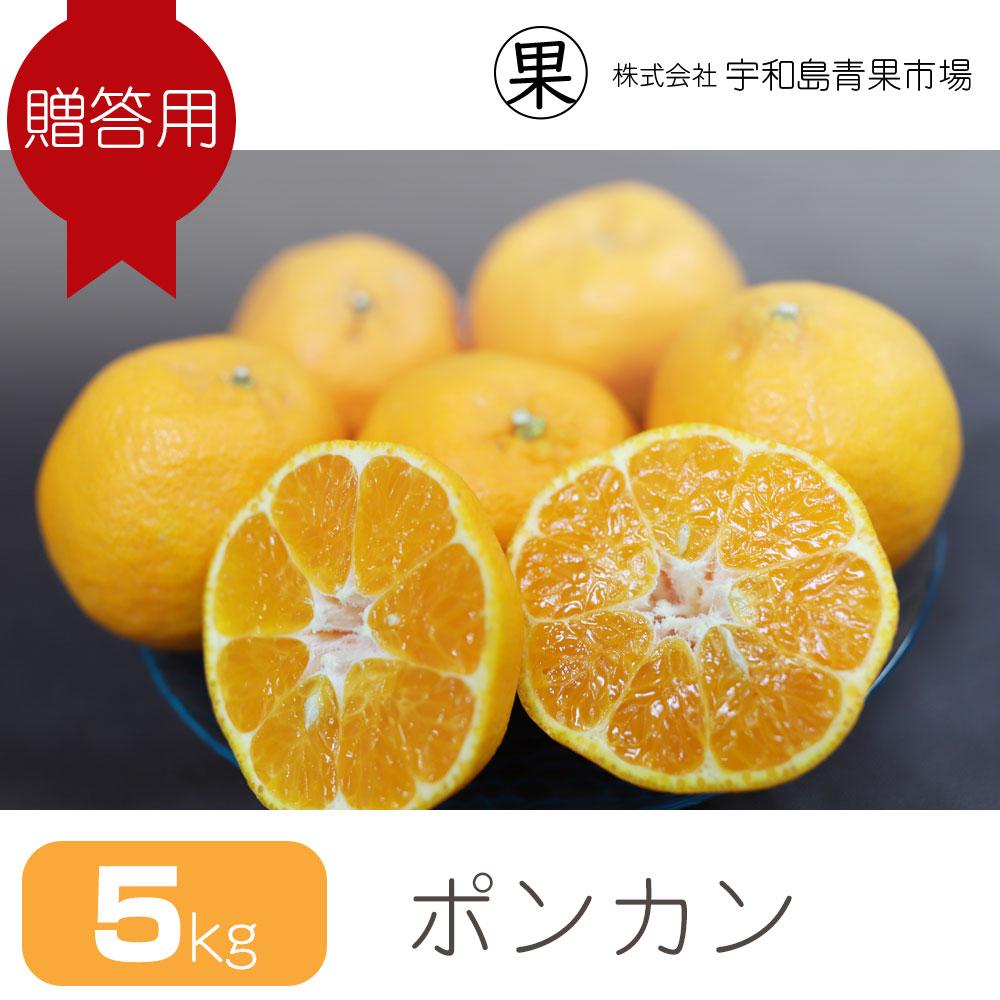 【贈答用】 ポンカン 5�   愛媛県宇和島産