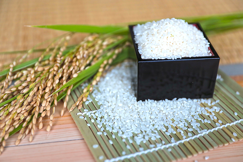 【2021年9月新米】低農薬 じぃじのコシヒカリ 5kg