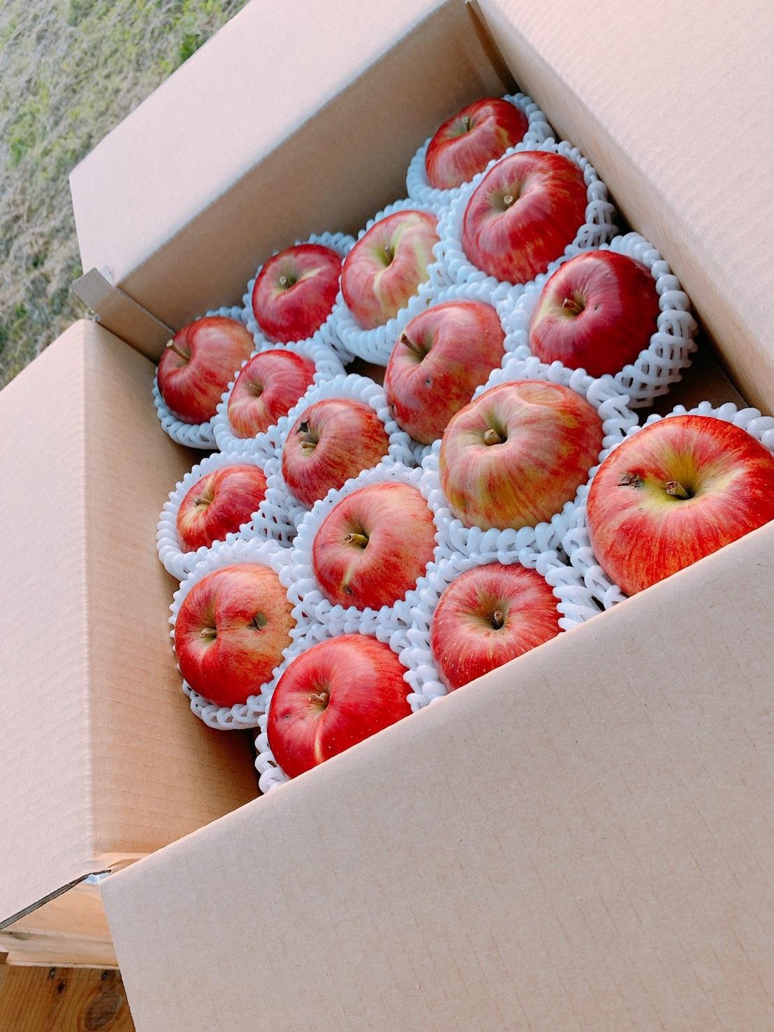 果樹園ポムの木 幸せの赤いりんご🍎5kg(16~20個)