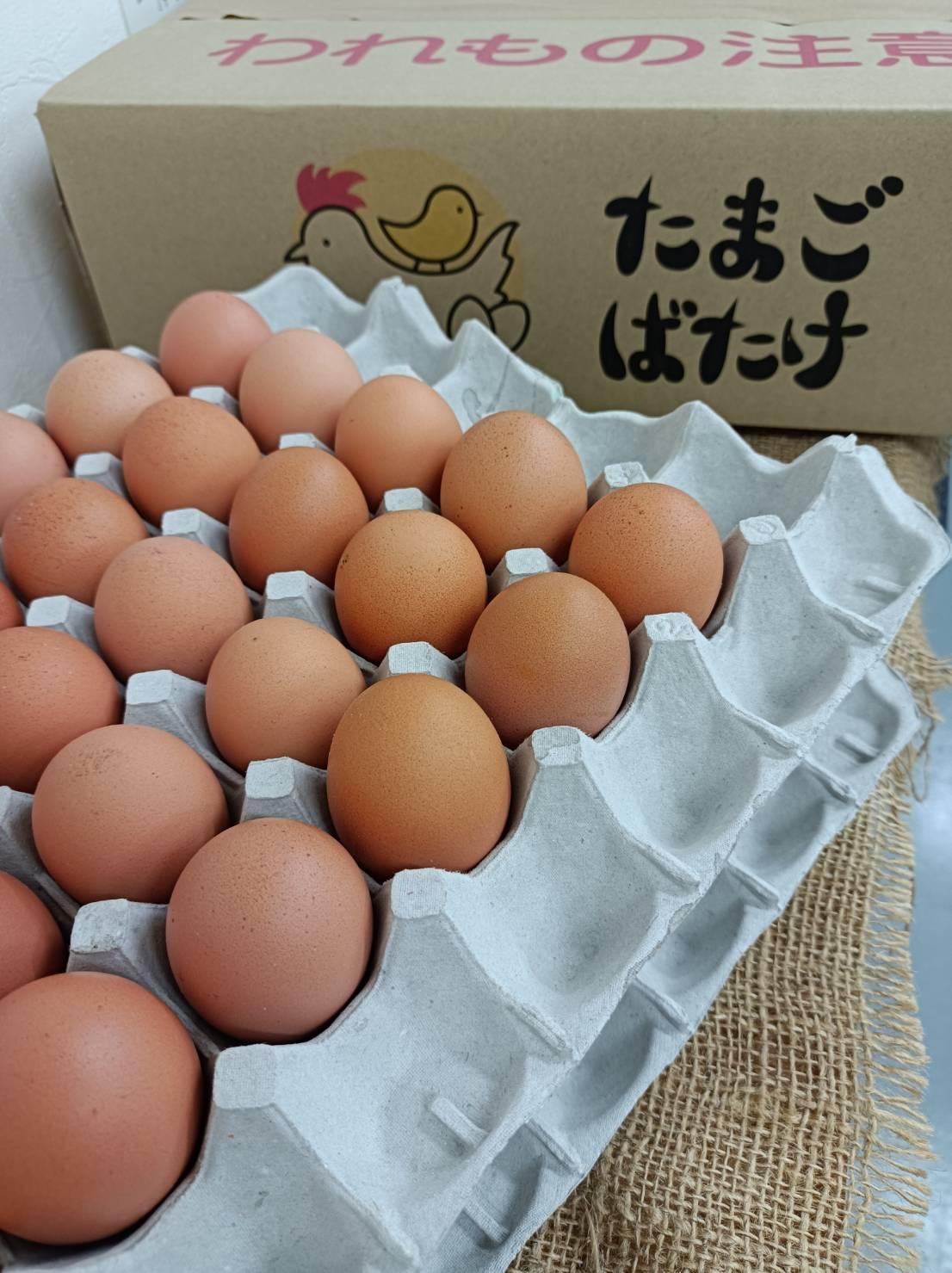 たまごばたけ 希少な平飼い卵 80個入り