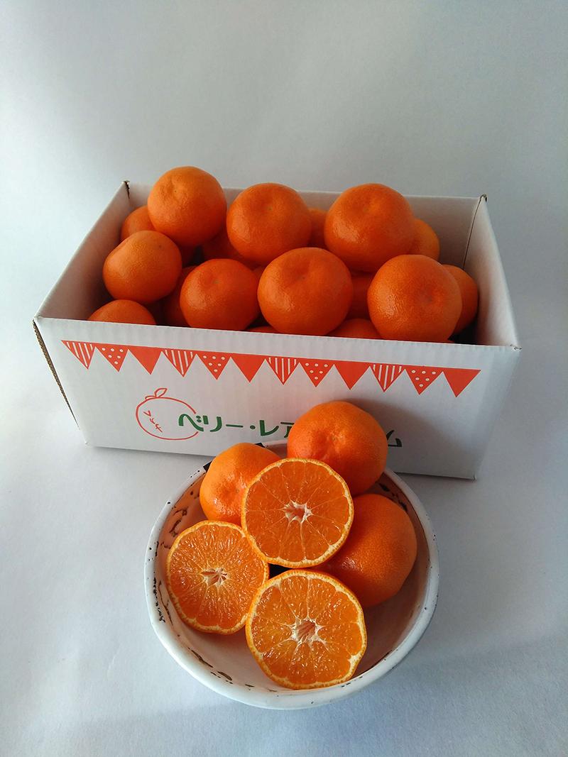 唐津産 幻のみかん マーコットオレンジ 2.5kg