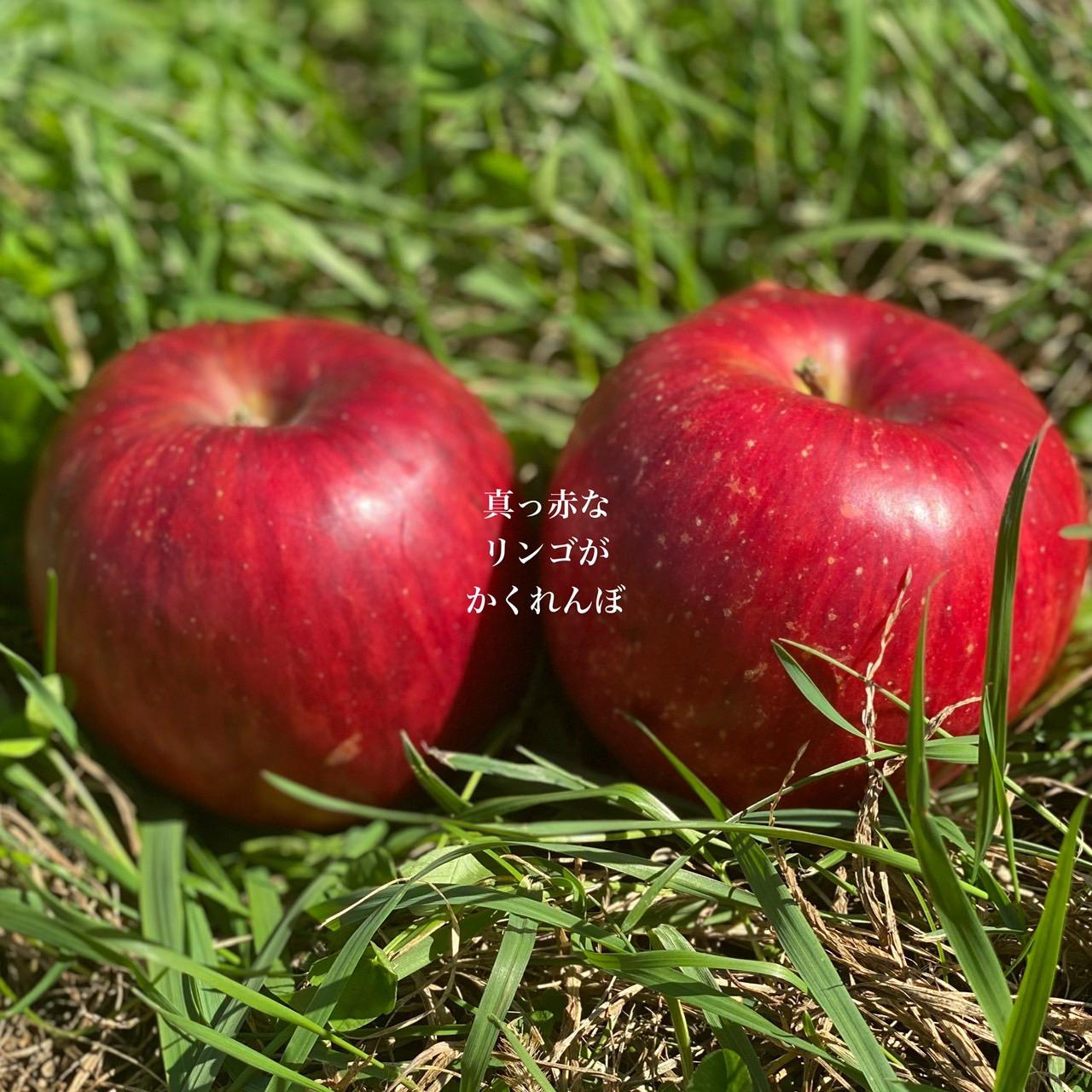 仲沢りんご園 信州りんご三兄弟の次男シナノスイート🍎 4kg(14~18個)