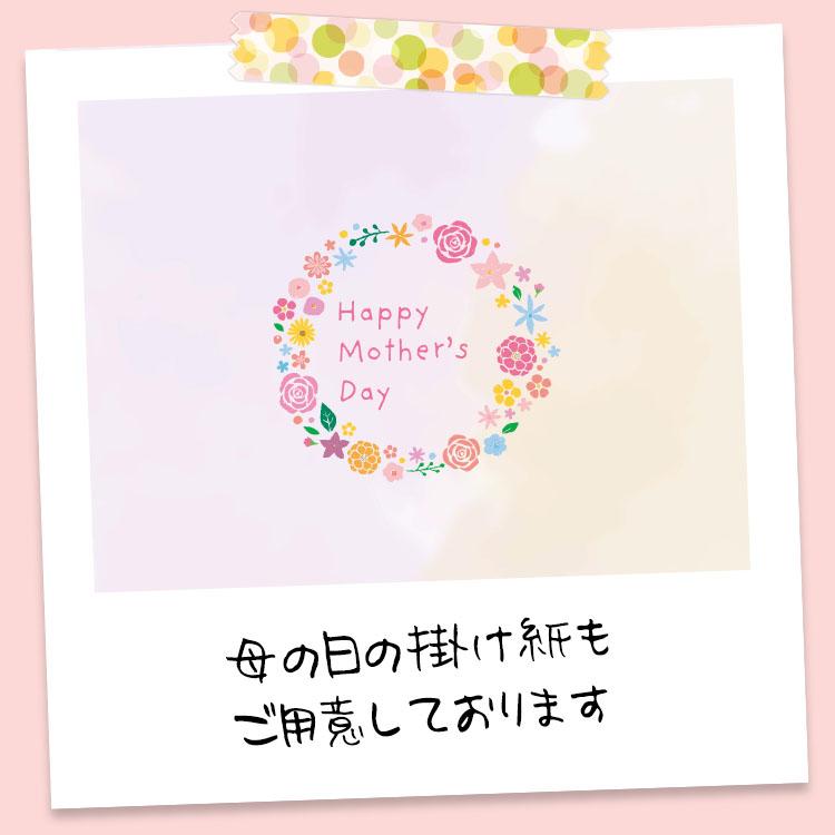 仙七マンスリーBOX(4月)送料30%OFF
