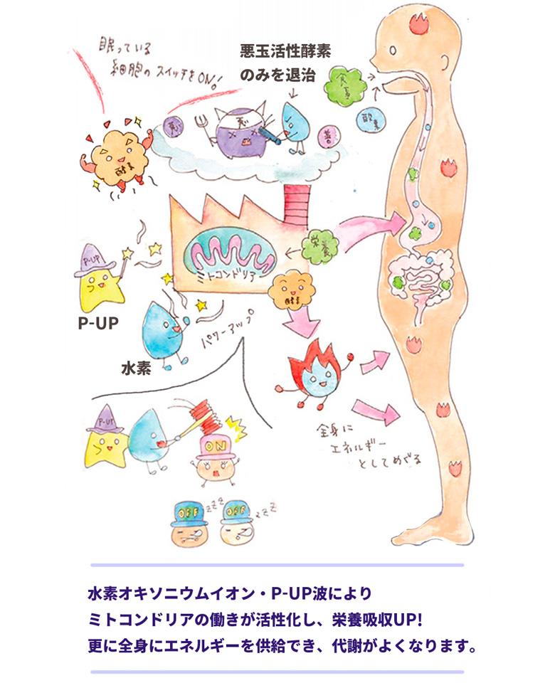 水素水 | P-UP 水素イオンミネラルウォーター