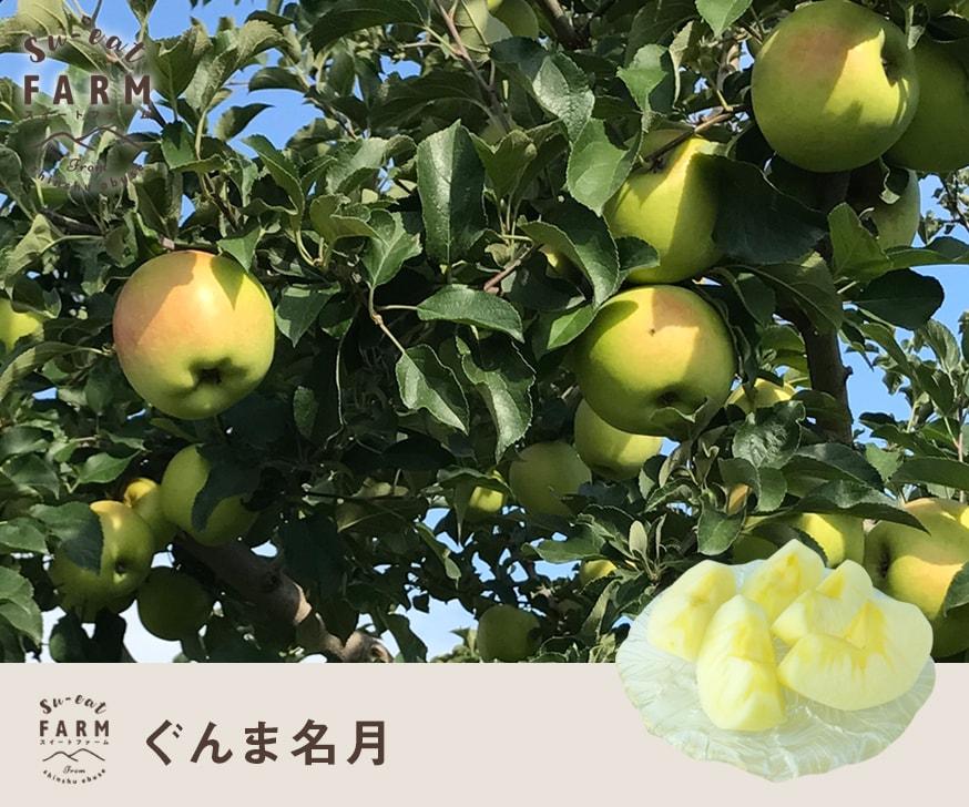 予約販売 「11月上旬」特選 ぐんま名月 10キロ 【長野県産】