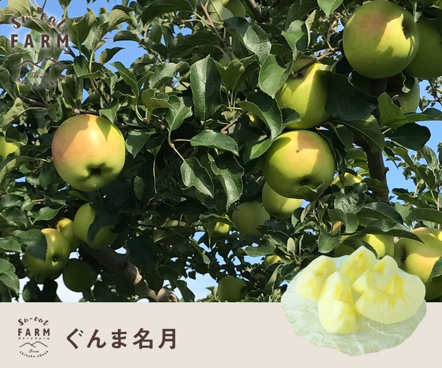 予約販売 「11月上旬」特選 ぐんま名月 5キロ 【長野県産】
