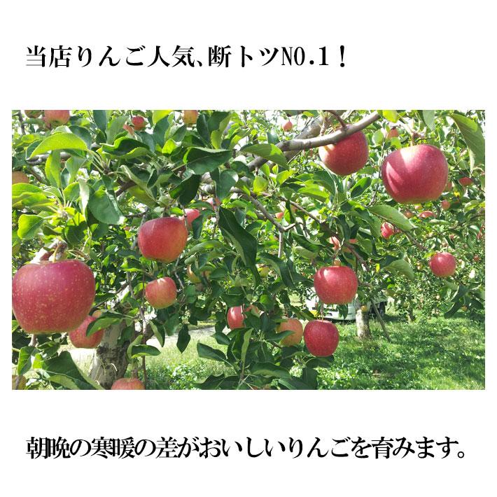 特選 サンふじ  3キロ