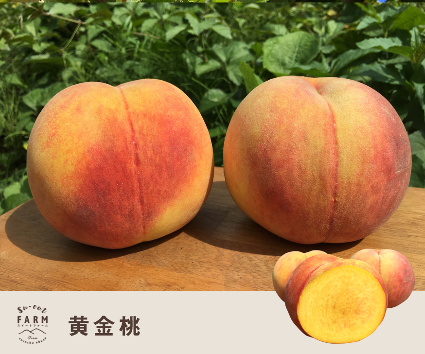 8月中旬〜下旬発送 黄金桃  10キロ