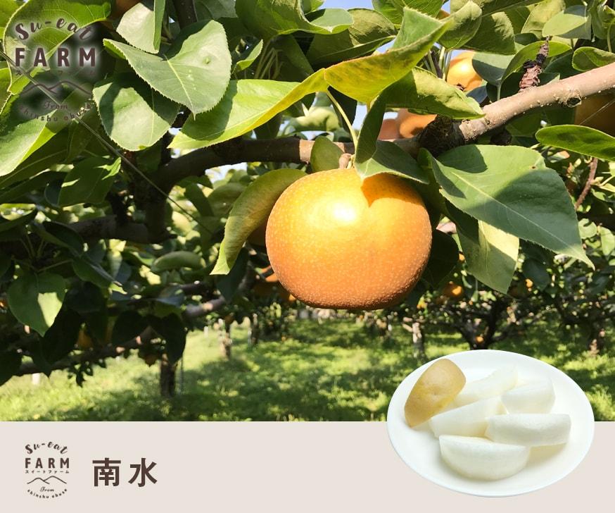 9月中旬〜下旬発送 特選  南水 10キロ