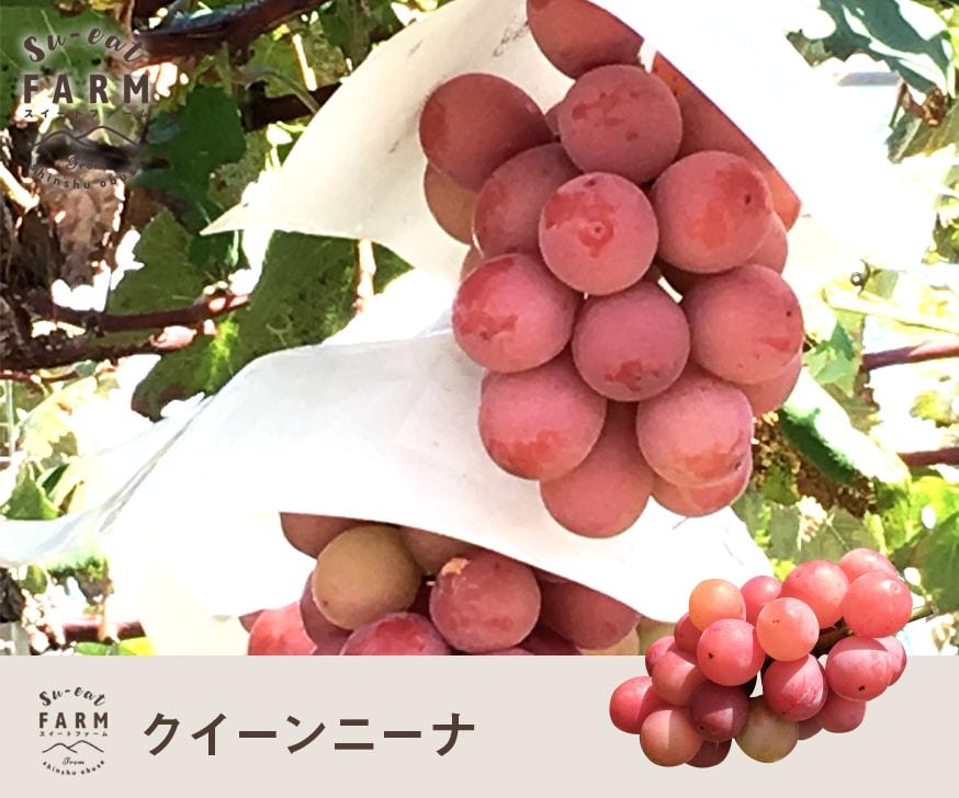 予約販売 「9月下旬」 クイーンニーナ  2キロ 長野県産