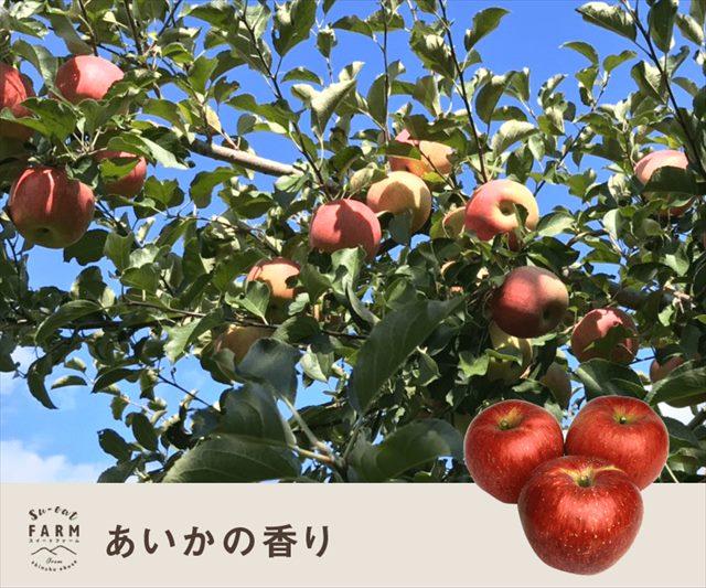 11月中旬〜下旬発送 あいかの香り 3キロ