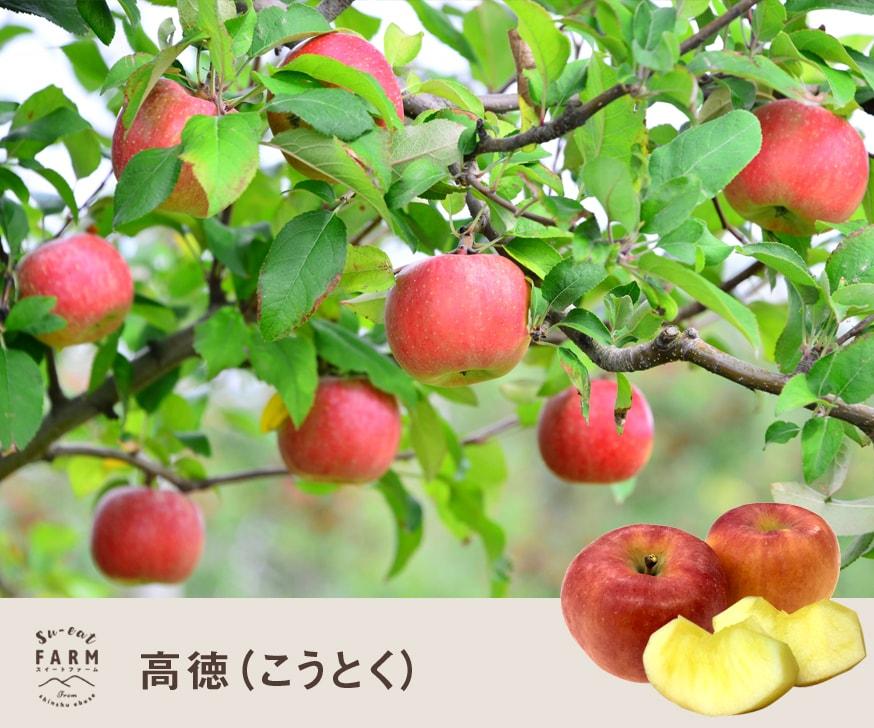 予約販売 「10月中旬」高徳  3キロ 【 長野県産】