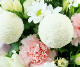 【供アレンジ0015】春花-はるか-(W/LP)【ヤマト急便80cmサイズ】